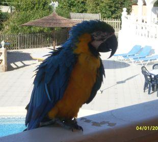 Rico, der Hausmeister Hotel Los Caballos