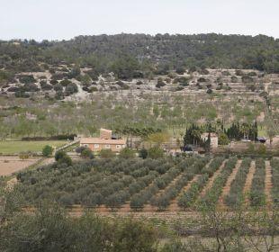 Das Fincagelände Agroturismo S'Hort de Son Caulelles