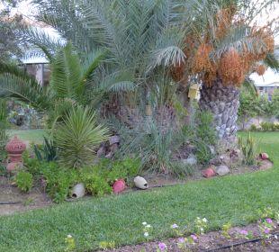 Gartenanlage Hotel Fiesta Beach Djerba