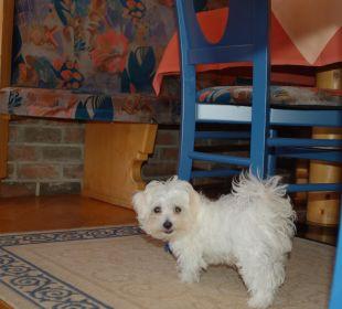 Sammy der Wachhund