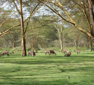 Sicht auf die frei herumlaufenden Tiere