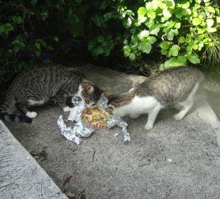 Bitte füttert die Katzen! Cocos Hotel
