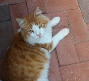 Das ist Pushkin, er wohnt im Hotel Hotel Günes