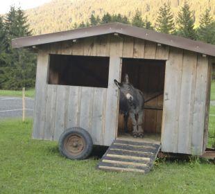 "3 Esel gehören hier zum ""Inventar"" Gasthof Bergblick"