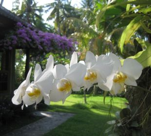 Orchideen Saraswati Holiday House