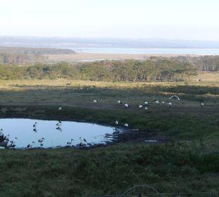 Von Restaurant auf das Wasserloch Hotel Lake Nakuru Lodge