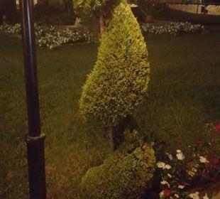 Pflanzen Kilikya Palace Göynük