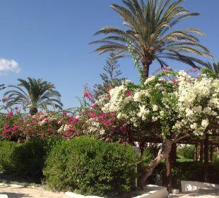 Hotel Nissi Beach Resort Hotel Nissi Beach Resort