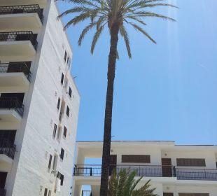 Palme vor dem Hotel JS Hotel Cape Colom