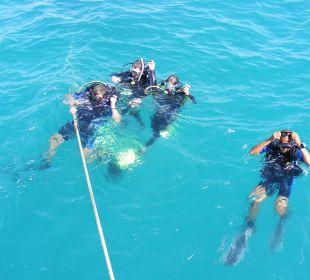 Diving Center Grand Hotel Stella di Mare