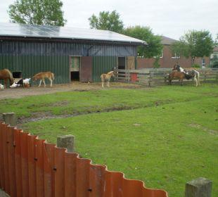 Ponyweide Ferienhaus Wattkuckuck