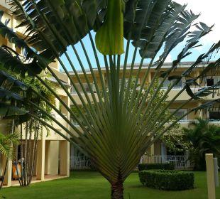 Garten Grand Bahia Principe El Portillo
