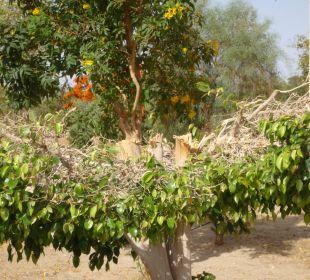 Armer Baum wie konnte es soweit kommen