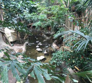 Jungle Dome Center Parcs Het Heijderbos