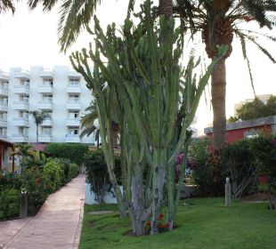 Die Bungalowanlage Hotel Miraflor Suites