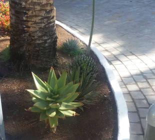 Gartenanlage sehr schön Hotel Dunas Don Gregory