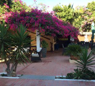 Aussenbereich mit Bar Hotel Casa Pepe