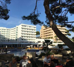 Hotel mit Pool und  Sitzplätzen unter Pinien Olimarotel Gran Camp de Mar