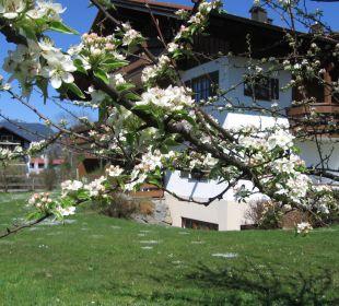 Unser Haus am Mühlenweg im Frühjahr Ferienwohnungen Thannheimer