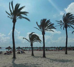 Strand JS Hotel Sol de Alcudia