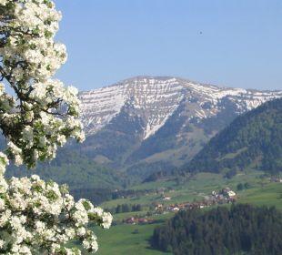 Blick vom Hotelgarten zum Hochgrath im Frühling Berghof am Paradies