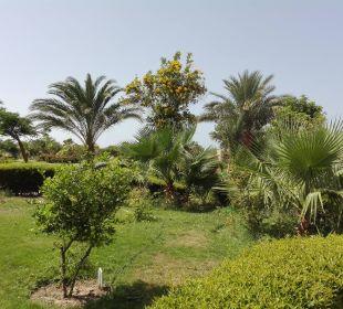 Ogród Three Corners Fayrouz Plaza Beach Resort