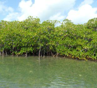 Mit dem Speedboot zu den Mangroven Dreams La Romana Resort & Spa