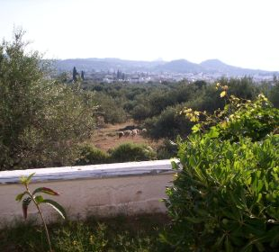 Blick auf Schafherde vor dem Hotel Hotel Karavos