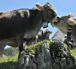 Die hübschen Allgäuer Kühe Hotel Garni Malerwinkl