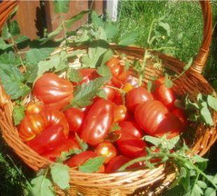 Frische Tomaten Appartement & Weingut Linter