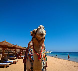 Am Strand SUNRISE Select Royal Makadi Resort