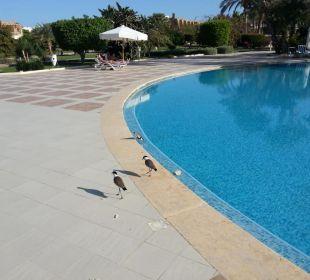 Basen Brayka Bay Resort