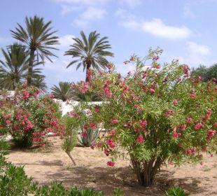 Ogród Hotel Sidi Slim