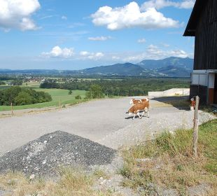 Ausblick auf die Berge Oberulpointhof