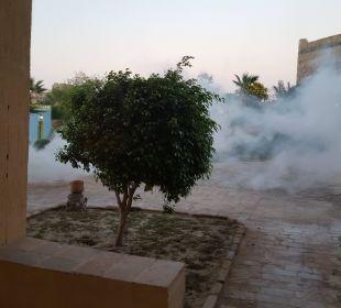 Mückenbekämpfung abends!