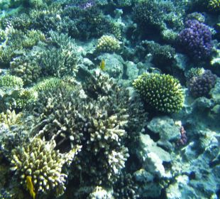 Riff Stella Di Mare Beach Resort & Spa Makadi Bay