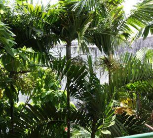 Вид из номера Hotel Pattaya Garden