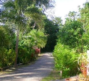 Unsere neu zementierte Zufahrt entlang der Palmen. Guest House Green Garden House