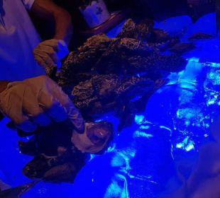 Meeres Delikatessen Hotel Royal Dragon