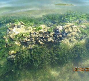 Unter Wasser  Hotel Palos