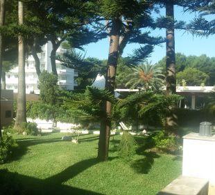 Gartenanlage zwischen Apartementhaus/Rezeptionsgeb Appartments Pabisa Orlando