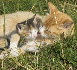 Katzen Mutterliebe auf dem Oberjosenhof Ferienbauernhof Oberjosenhof
