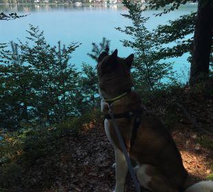 Ausblick im Wald