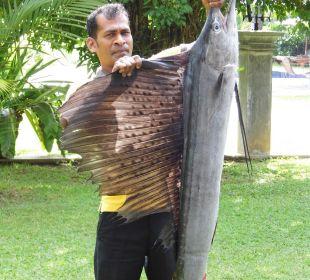Fangfrischer Schwertfisch...später unser Dinner  Amal Villa