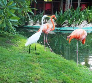 Tiere Hotel Natura Park Resort & Spa