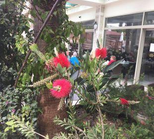 Schöne Bepflanzung Hotel Side Crown Palace