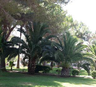 Gartenanlage OLA Aparthotel Cecilia