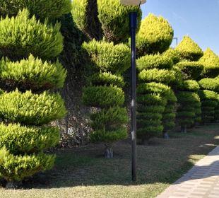 Tolle Bäume Hotel Concorde De Luxe Resort