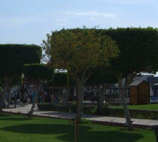 Bäume in der Anlage