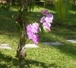 Wunderschöne Orchideen Lake View Bungalows